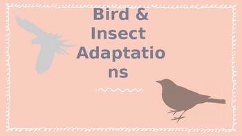 Bird and Insect Adaptations