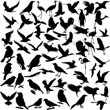 Bird silhouette digital clipart