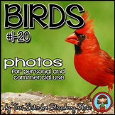 Photos Photographs Birds #1  Science and Nature Personal and Commercial Use