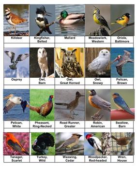 Birds 1 Rummy