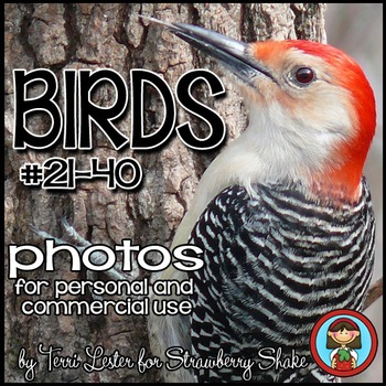 Photos Photographs Birds #2 Science and Nature for Personal and Commercial Use