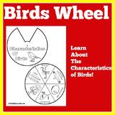 Birds Activity | Birds Unit | Characteristics of Birds