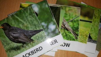 Birds 3 Part Cards
