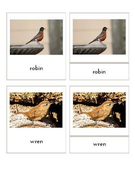 Birds (3-Part Montessori Cards)