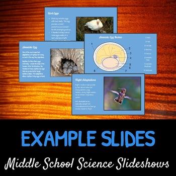 Birds: A Life Sciences Slideshow!