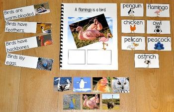 "Birds Adapted Book--""A Flamingo is a Bird"" (w/Real Photos)"