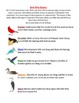 Birds-All About Our Fine Feathered Friends-Informational Text/Science/Literacy!