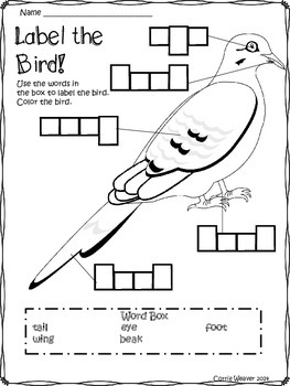Birds: All about birds