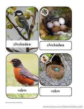 Birds And Their Eggs – Montessori Nomenclature Cards