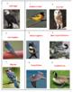 Birds Battle Game 1