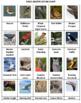 Birds Battle Game 2