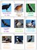 Birds Battle Game 3