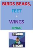 Birds Beaks, Feet and Wings Bingo