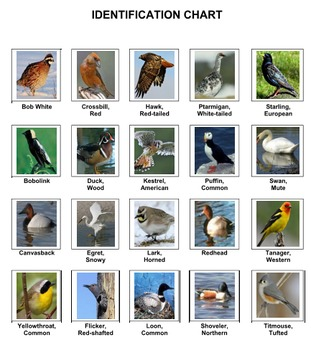 Birds Bingo Volume 3