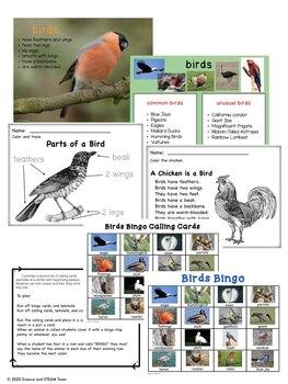 Birds Bingo and Posters