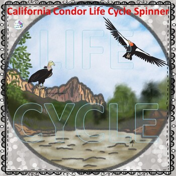 Birds Life Cycle Spinner Bundle #1