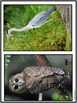 Birds - Characteristics of Animals Leson Plan, Photos, Poster