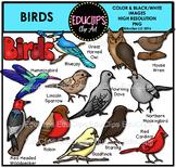 Birds Clip Art Bundle {Educlips Clipart}