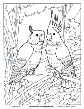 Birds Coloring Book One
