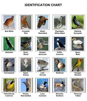 Birds Crossword Puzzles  Vol. 3