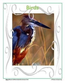 Birds - Differentiated Blooms Enrichment Unit