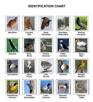 Birds Dominoes Volume 3