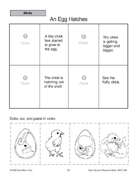 Birds: Eggs and Life Cycles