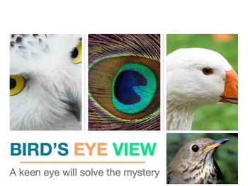Bird's Eye View Mystery Puzzle - Mac Version