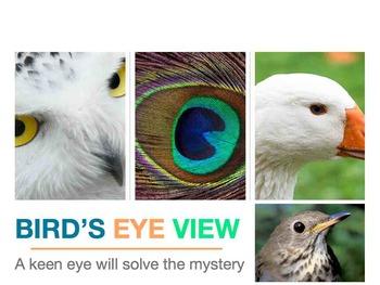 Bird's Eye View Mystery Puzzle - Mac Version