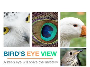 Bird's Eye View Mystery Puzzle Interdisciplinary Powerpoint ESL SPED Sub No prep