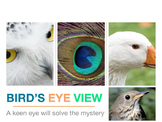 Bird's Eye View Mystery Puzzle Interdisciplinary Powerpoint ESL SPED Sub No prep