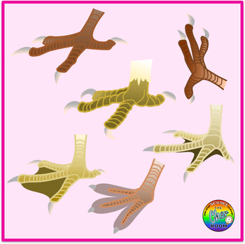 Birds Feet Clipart (Birds Adaptations)