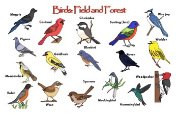 """Birds Poster - Field and Forest : """"Ledger/Tabloid"""" (11 x 17 inches)"""