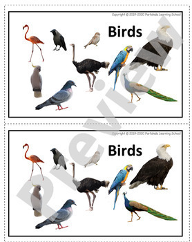 Birds - Flash Cards with Real Images