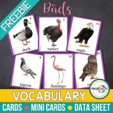 Birds Flashcards: Photo Cards Vocabulary for Speech Therapy, Autism and ESL