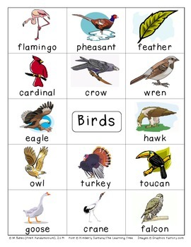 Birds Flashcards Theme Words Poster Vocabulary Pictionary