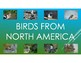 Birds From Around the World-Pictures, diet, habitat, attributes, babies.