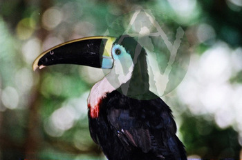 Birds: Heron, Pelican, Kingfisher, Bee-eater, Rollers, Eagles, Owl, Turkey More