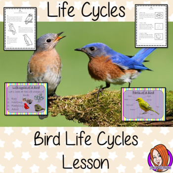 Birds Life Cycles -  Complete Science Lesson