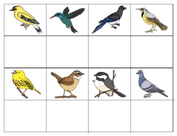 Birds:  mini Matching and Vocabulary Enrichment Cards