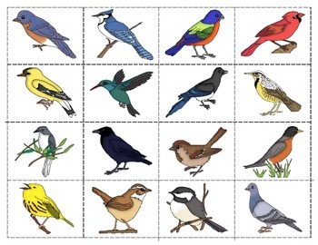 Birds: Match-up and Vocabulary Enrichment Cards