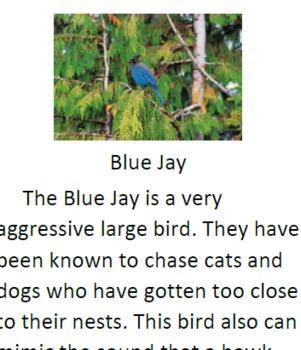 Birds Mini-unit Informational Text