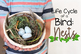 Birds: Nests (Life Cycles Pack)