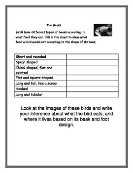 Birds Note Taking