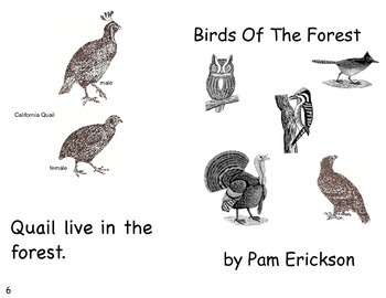 Birds Of The Forest- a non-fiction guided reading book