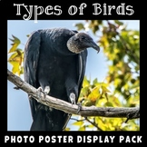 Birds Photo Poster Display Pack
