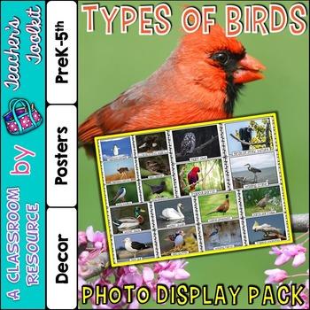 Birds Photo Poster Display Pack {UK Teaching Resource}