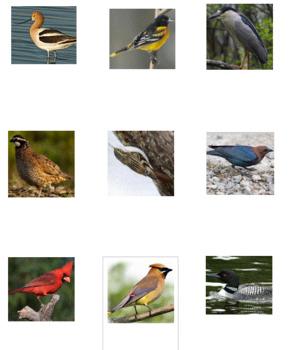 Birds Photo Safari Game -- Volume 2