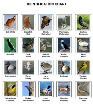 Birds Photo Safari Game -- Volume 3
