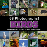 Photos Photographs BIRDS clip art